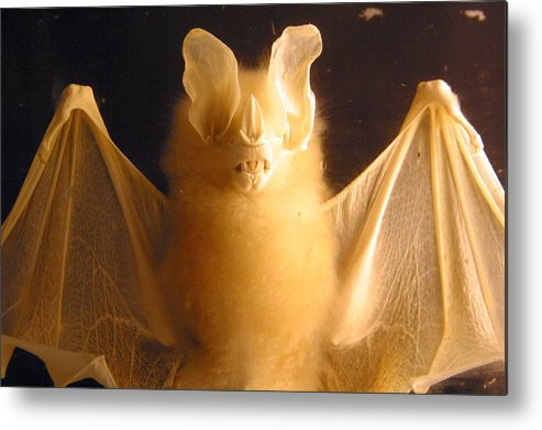 Jez C Self Metal Print featuring the photograph Bat Out Of Gel by Jez C Self