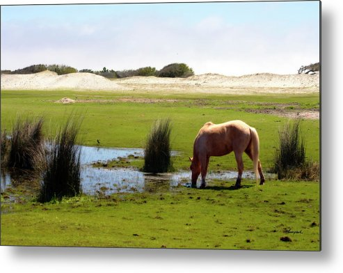 Photo Metal Print featuring the photograph Beach Pony by Alan Hausenflock