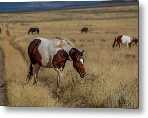 Wild Metal Print featuring the photograph Beauty Walking by Clicking With Nature