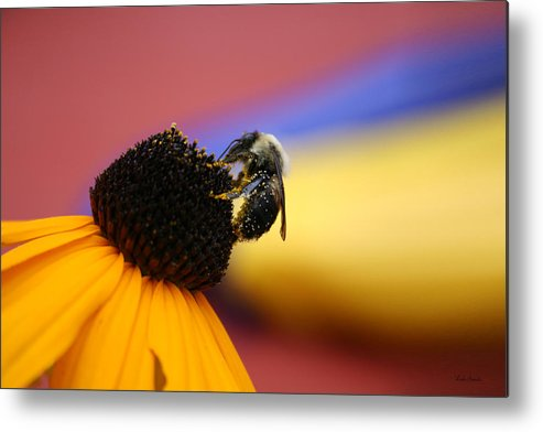 Insects Metal Print featuring the photograph Bee All You Can Bee by Linda Sannuti