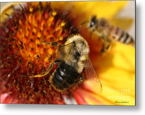 Bee Metal Print featuring the photograph Bee One by Silvana Siudut