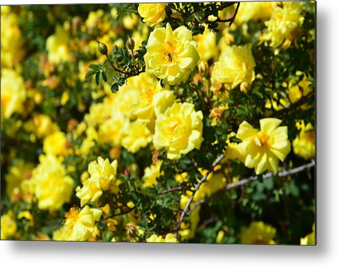 Bee Metal Print featuring the photograph Bees Love It by Linda Larson