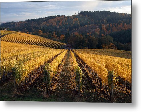 Wine Metal Print featuring the photograph Bella Vida Vineyard 1 by Sherrie Triest
