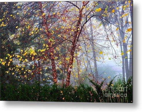 Autumn Metal Print featuring the photograph Birch Weightlessness by Malgorzata Wryk-Igras
