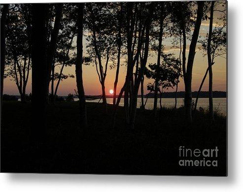 Birch Metal Print featuring the photograph Birches Watch The Sunset by Faith Harron Boudreau