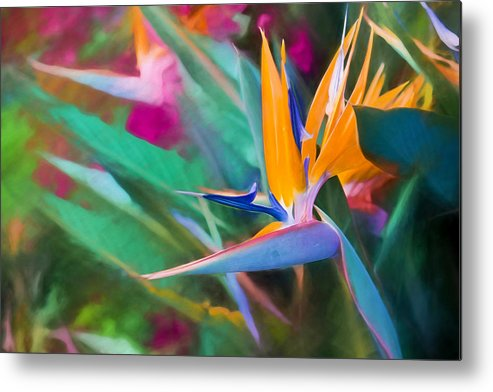 Beauty Metal Print featuring the photograph Bird Of Paradise by Carl Clay