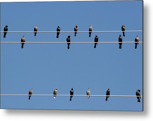 Birds Metal Print featuring the photograph Bird On A Wire by Christine Till