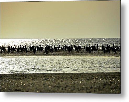 Birds In The Sunset. Dunai River Metal Print featuring the photograph Sunset Birds by Boris Andresyuk