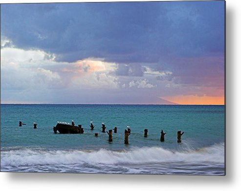 Birds Metal Print featuring the photograph Birds On Old Jetty- St Lucia by Chester Williams