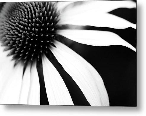 Horizontal Metal Print featuring the photograph Black And White Flower Maco by Copyright Johan Klovsjö