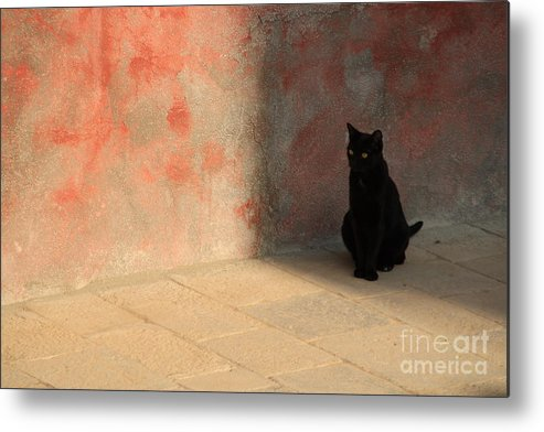Cats Metal Print featuring the photograph Black Cat On Burano by Michael Henderson