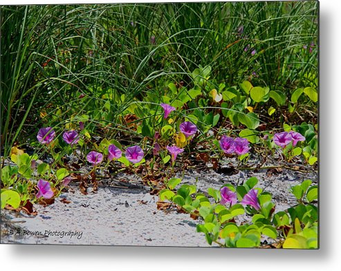 Cross Vines Metal Print featuring the photograph Blooming Cross Vines Along The Beach by Barbara Bowen
