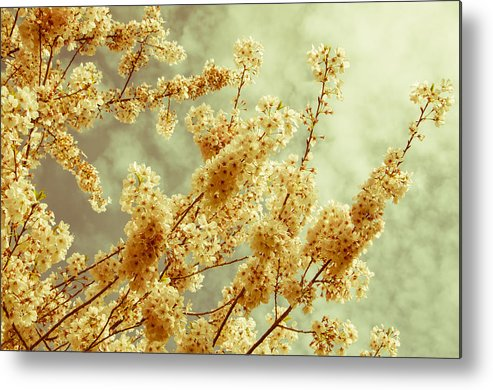 Branches Metal Print featuring the photograph Sakura - Tinted by Marilyn Wilson