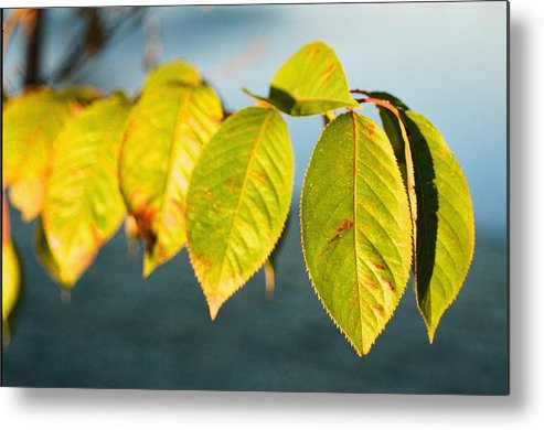 Blue Metal Print featuring the photograph Blue And Green by Jonathan Michael Bowman