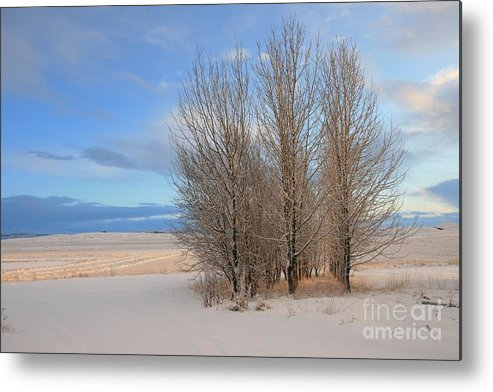 Winter Metal Print featuring the photograph Blue Aspen by Agusta Gudrun Olafsdottir