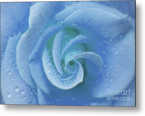 Flower Metal Print featuring the photograph Blue Rose by Julia Hiebaum