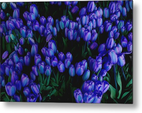 Blue Metal Print featuring the photograph Blue Tulips by Tom Reynen