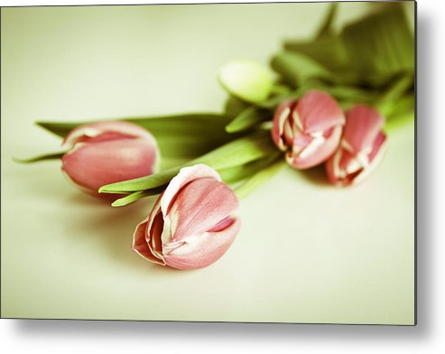 Tulips Metal Print featuring the photograph Blurred Memories by Enrico Crobu