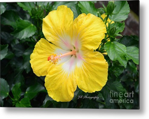 Bloom Metal Print featuring the photograph Bonaire Wind by Jeannie Rhode