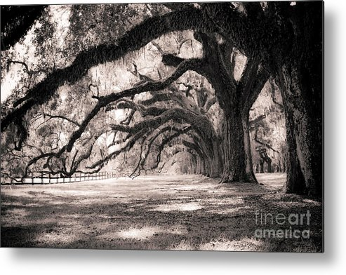 Boone Hall Metal Print featuring the photograph Boone Hall Plantation Live Oaks by Dustin K Ryan