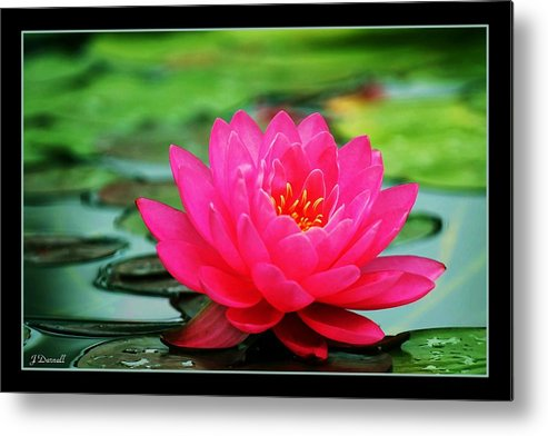 Water Lily Metal Print featuring the photograph Bordered Water Lily by Jim Darnall