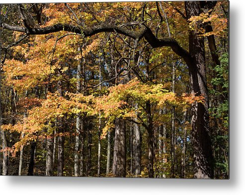 Digital Metal Print featuring the photograph Branching Out by Jeff Roney