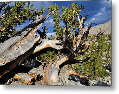 Great Basin National Park Metal Print featuring the photograph Bristlecone Great Basin Landscape by Kyle Hanson