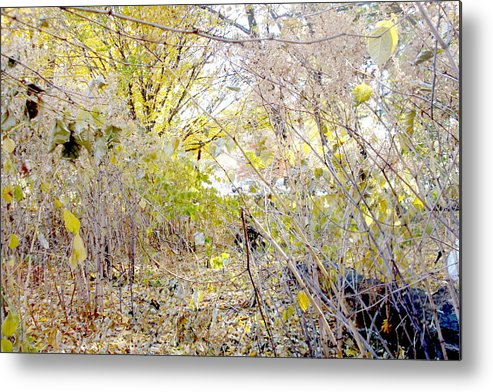 Image Metal Print featuring the photograph Brushes by Zois Shuttie