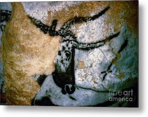 Bull Metal Print featuring the photograph Bull: Lascaux, France by Granger