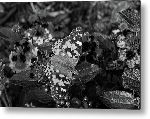 Butterfly Metal Print featuring the photograph Butterfly by Jeffrey Miller