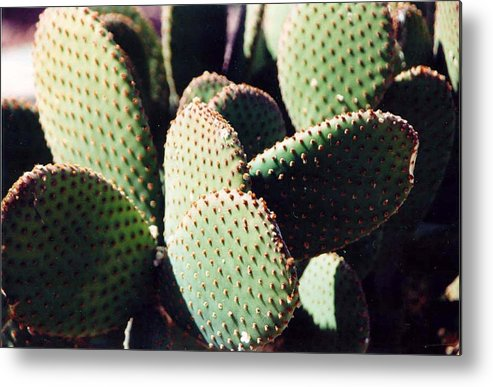 Field Metal Print featuring the photograph Cactus by Margaret Fortunato