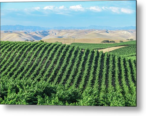 Agriculture Metal Print featuring the photograph California Vineyards 2 by David A Litman