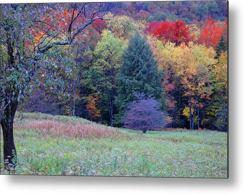 West Virginia Metal Print featuring the photograph Canaan Valley In Vivid by Roberta Kayne