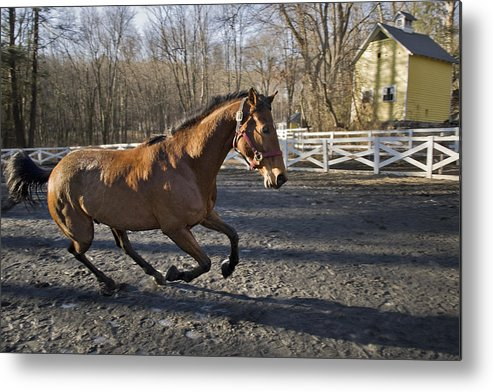 Horse Metal Print featuring the photograph Canter by Jack Goldberg