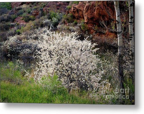Canyon Spring Metal Print featuring the photograph Canyon Spring by Jon Burch Photography
