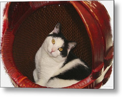 Cat Metal Print featuring the photograph Cat In A Basket by Margie Wildblood