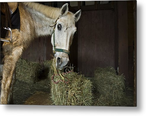 Horse Metal Print featuring the photograph Caught In The Act by Jack Goldberg