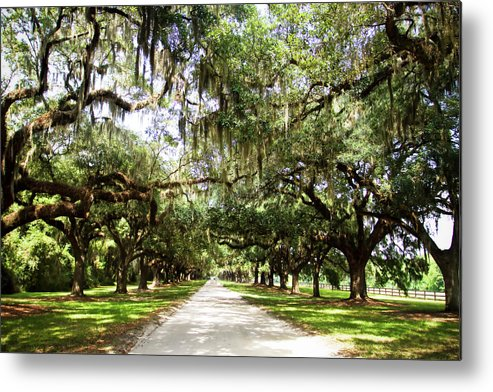 Photo Metal Print featuring the photograph Charleston Oaks 1 by Alan Hausenflock