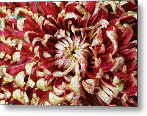 Flower Metal Print featuring the photograph Chase Perfection by Vanessa Thomas