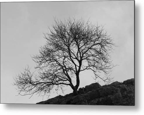 Tree Metal Print featuring the photograph Cheddar Gorge Tree by Lauri Novak