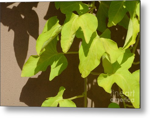 Leaves Metal Print featuring the photograph City Leaves by Merrimon Crawford