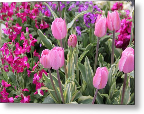 Flowers Metal Print featuring the photograph Close Up Mixed Planter by Allen Nice-Webb
