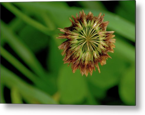 Clover Metal Print featuring the photograph Clover Past Due by Grant Groberg