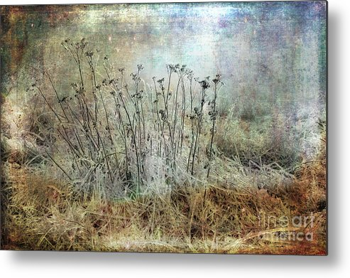 Cold Metal Print featuring the photograph Cold Flowers by Randi Grace Nilsberg