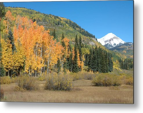 Aspen Metal Print featuring the photograph Colorado Gold by Jerry McElroy