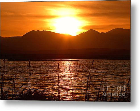 Colorado Metal Print featuring the photograph Colorado Marsh At Sunset by Max Allen