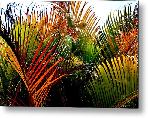 Palm-tree Metal Print featuring the photograph Colorful Palm Leaves by Reva Steenbergen