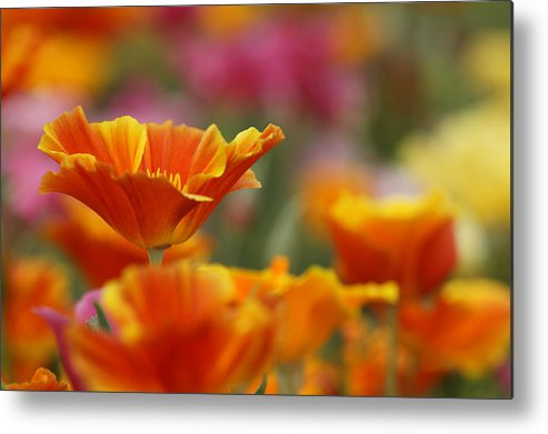 Agriculture Metal Print featuring the photograph Colors by Eggers Photography
