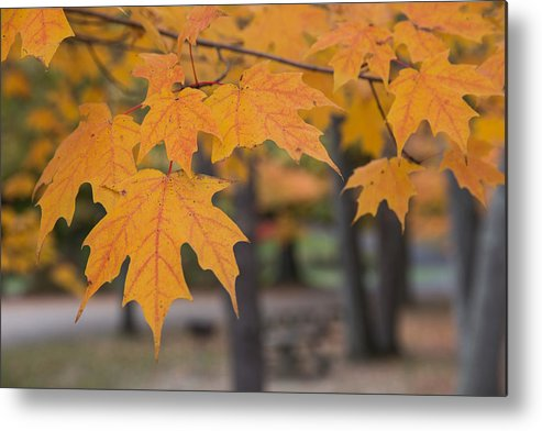 Color Metal Print featuring the photograph Colors Of Fall by Jordan Smith