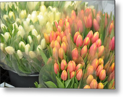 Gauze Metal Print featuring the photograph Colors Of Gauze by JAMART Photography